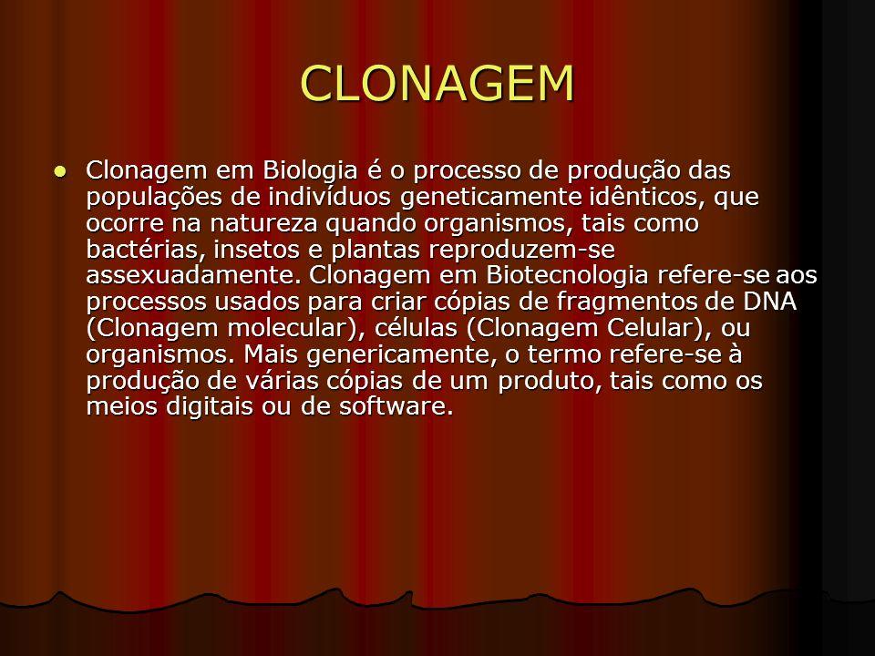 CLONAGEM Clonagem em Biologia é o processo de produção das populações de indivíduos geneticamente idênticos, que ocorre na natureza quando organismos, tais como bactérias, insetos e plantas reproduzem-se assexuadamente.