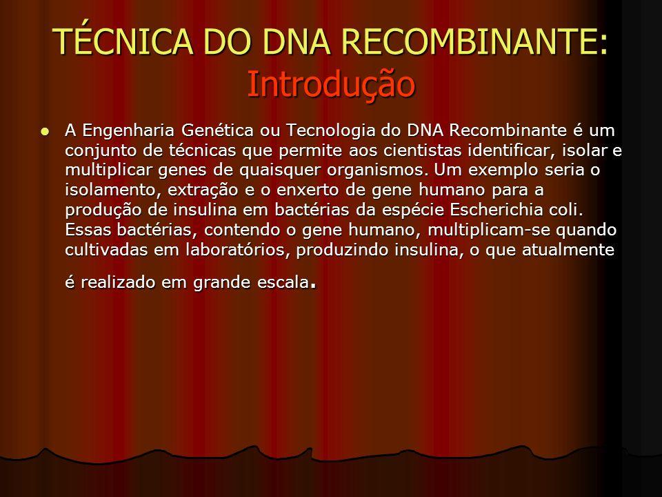 TÉCNICA DO DNA RECOMBINANTE: Introdução A Engenharia Genética ou Tecnologia do DNA Recombinante é um conjunto de técnicas que permite aos cientistas identificar, isolar e multiplicar genes de quaisquer organismos.