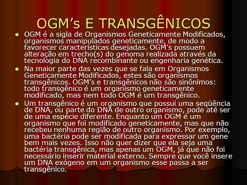 OGMs E TRANSGÊNICOS OGM é a sigla de Organismos Geneticamente Modificados, organismos manipulados geneticamente, de modo a favorecer características desejadas.