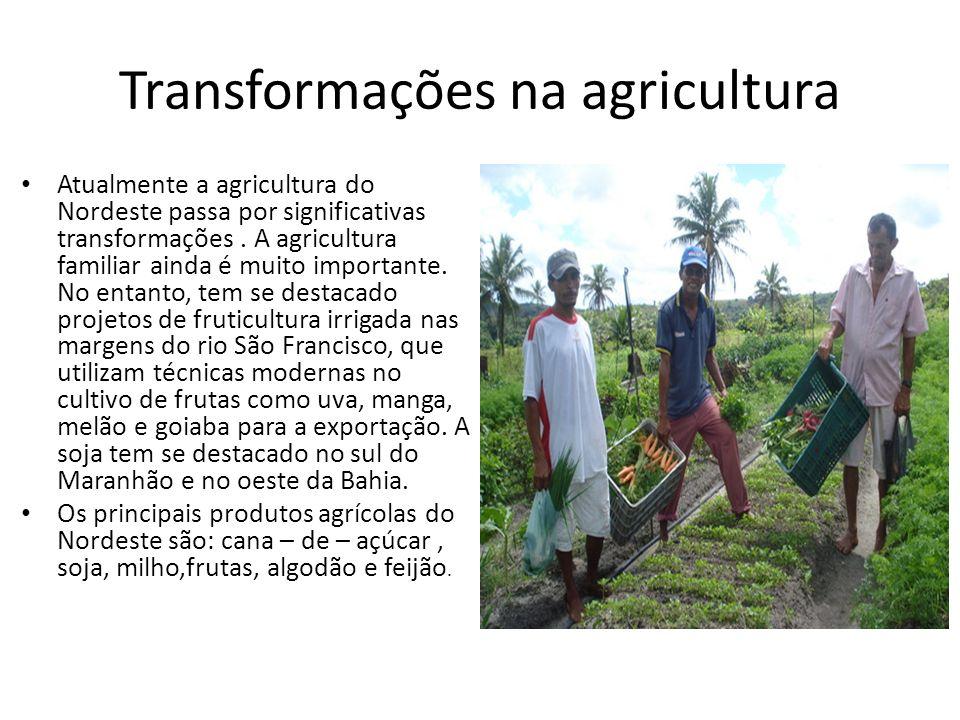 Transformações na agricultura Atualmente a agricultura do Nordeste passa por significativas transformações. A agricultura familiar ainda é muito impor