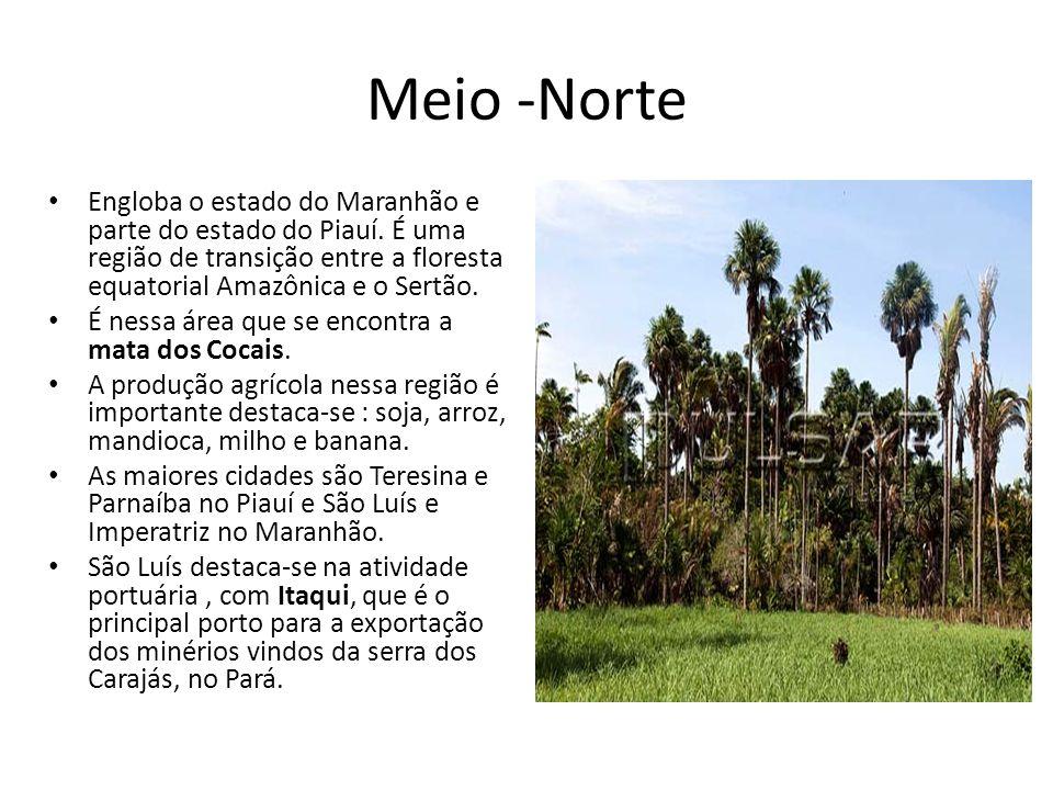 Meio -Norte Engloba o estado do Maranhão e parte do estado do Piauí. É uma região de transição entre a floresta equatorial Amazônica e o Sertão. É nes