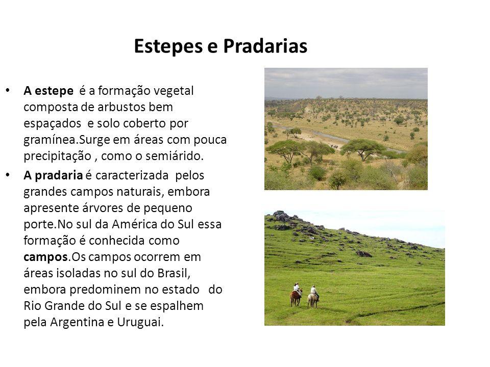 Estepes e Pradarias A estepe é a formação vegetal composta de arbustos bem espaçados e solo coberto por gramínea.Surge em áreas com pouca precipitação
