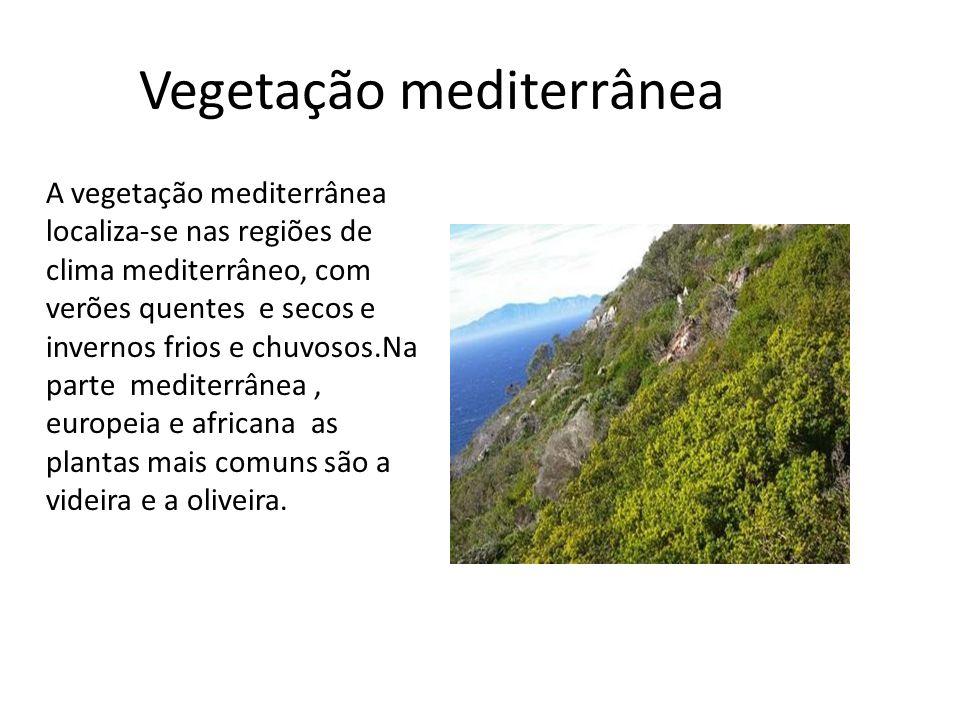 Vegetação mediterrânea A vegetação mediterrânea localiza-se nas regiões de clima mediterrâneo, com verões quentes e secos e invernos frios e chuvosos.