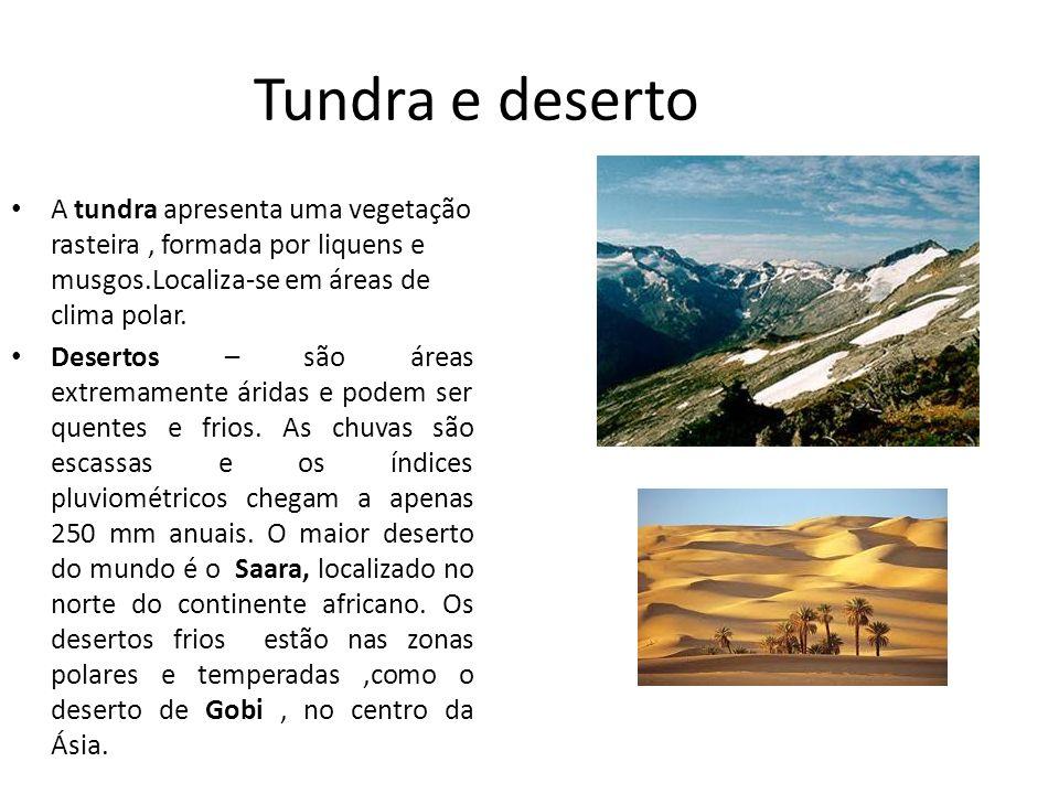 Tundra e deserto A tundra apresenta uma vegetação rasteira, formada por liquens e musgos.Localiza-se em áreas de clima polar. Desertos – são áreas ext