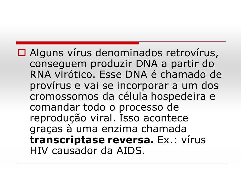 Alguns vírus denominados retrovírus, conseguem produzir DNA a partir do RNA virótico. Esse DNA é chamado de provírus e vai se incorporar a um dos crom