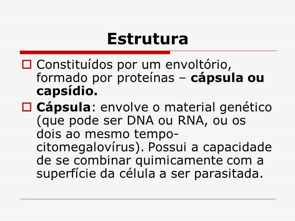 Estrutura Constituídos por um envoltório, formado por proteínas – cápsula ou capsídio. Cápsula: envolve o material genético (que pode ser DNA ou RNA,