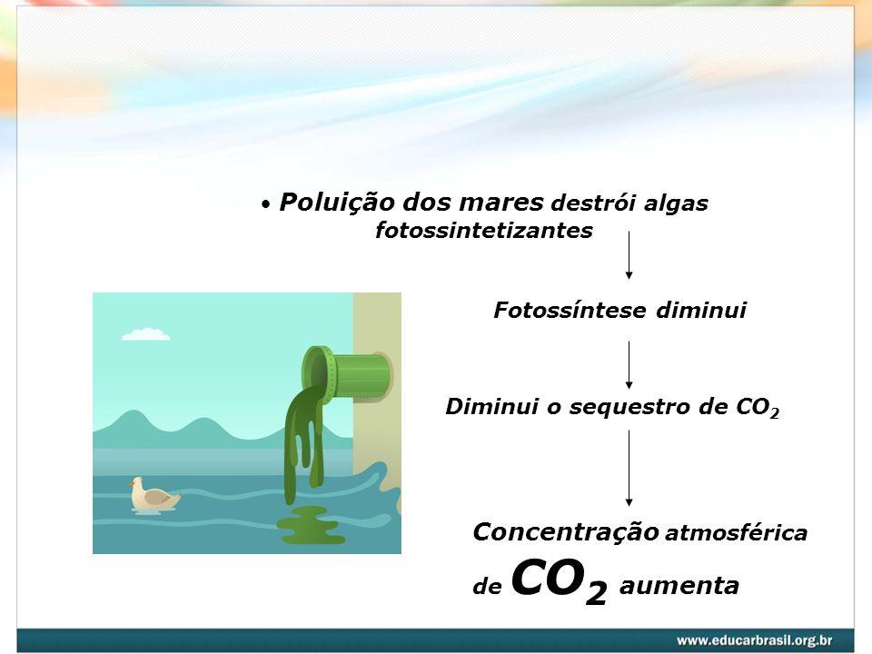 Poluição dos mares destrói algas fotossintetizantes Fotossíntese diminui Diminui o sequestro de CO 2 Concentração atmosférica de CO 2 aumenta