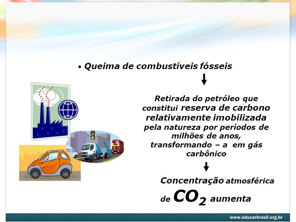 Pecuária Ruminantes arrotam gás metano – CH 4 Concentração atmosférica de CH 4 aumenta