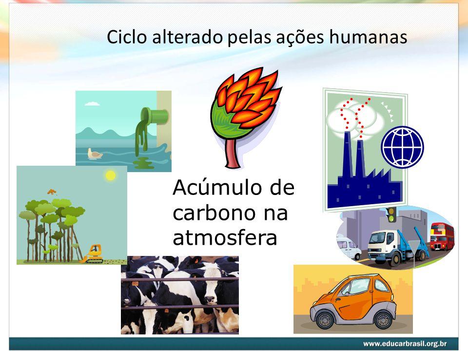 Ciclo alterado pelas ações humanas Acúmulo de carbono na atmosfera