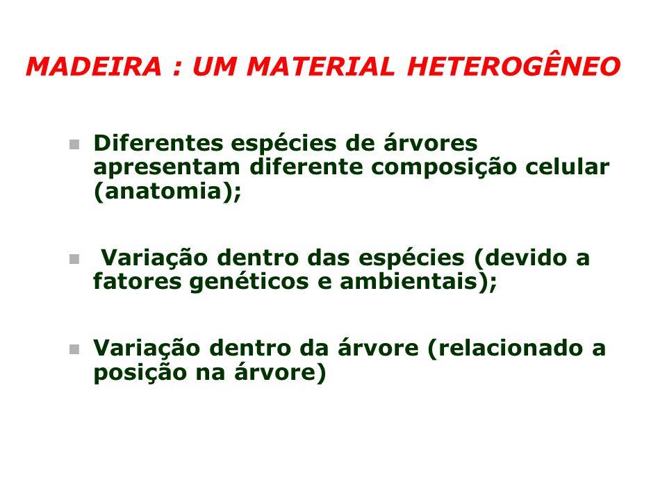 MADEIRA : UM MATERIAL HETEROGÊNEO n Diferentes espécies de árvores apresentam diferente composição celular (anatomia); n Variação dentro das espécies