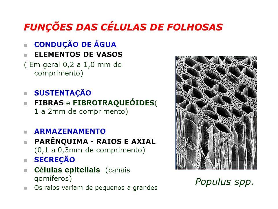 FUNÇÕES DAS CÉLULAS DE FOLHOSAS n CONDUÇÃO DE ÁGUA n ELEMENTOS DE VASOS ( Em geral 0,2 a 1,0 mm de comprimento) n SUSTENTAÇÃO n FIBRAS e FIBROTRAQUEÓI