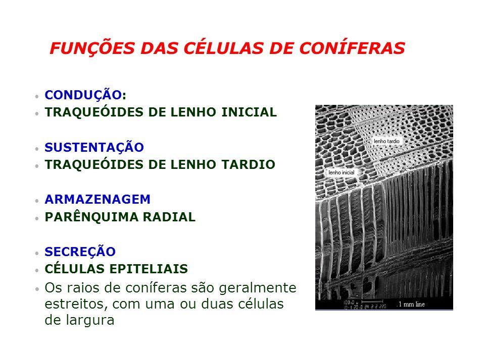 FUNÇÕES DAS CÉLULAS DE CONÍFERAS CONDUÇÃO: TRAQUEÓIDES DE LENHO INICIAL SUSTENTAÇÃO TRAQUEÓIDES DE LENHO TARDIO ARMAZENAGEM PARÊNQUIMA RADIAL SECREÇÃO