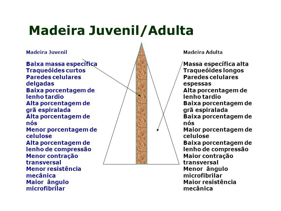 Madeira Adulta Massa específica alta Traqueóides longos Paredes celulares espessas Alta porcentagem de lenho tardio Baixa porcentagem de grã espiralad