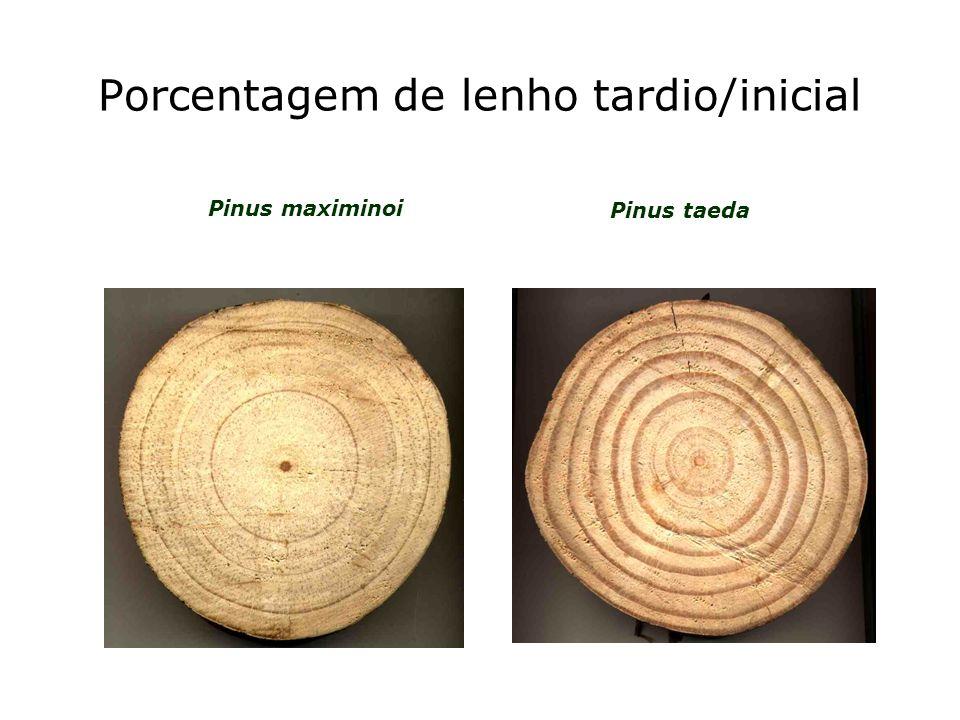 Porcentagem de lenho tardio/inicial Pinus maximinoi Pinus taeda