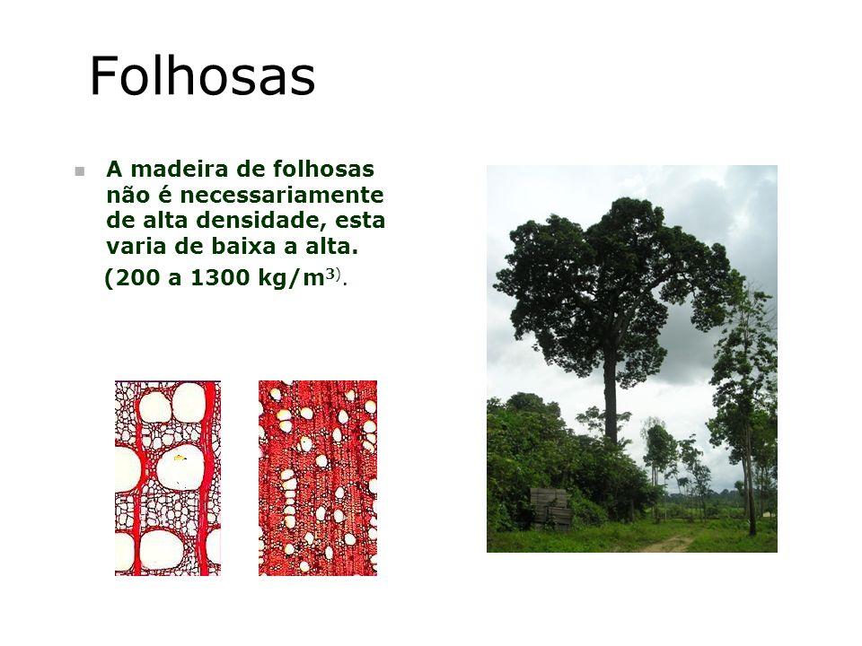 Folhosas n A madeira de folhosas não é necessariamente de alta densidade, esta varia de baixa a alta. (200 a 1300 kg/m 3).