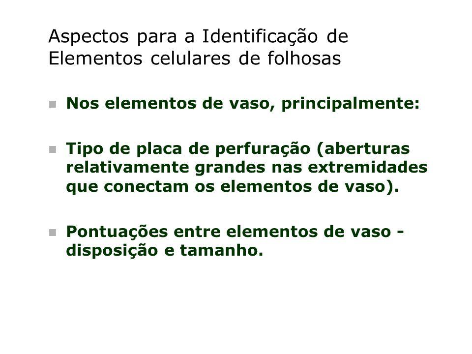 Aspectos para a Identificação de Elementos celulares de folhosas n Nos elementos de vaso, principalmente: n Tipo de placa de perfuração (aberturas rel