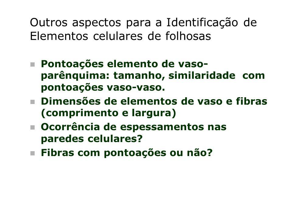 Outros aspectos para a Identificação de Elementos celulares de folhosas n Pontoações elemento de vaso- parênquima: tamanho, similaridade com pontoaçõe