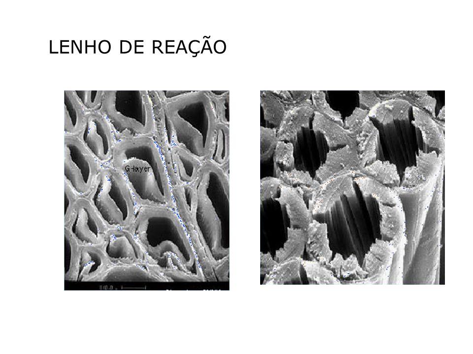LENHO DE REAÇÃO
