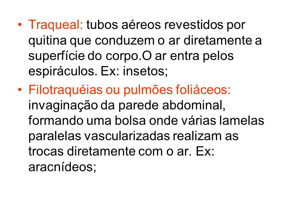 Pulmões: estruturas elásticas, ocas, compostas por estruturas finas de trocas denominados alvéolos pulmonares.