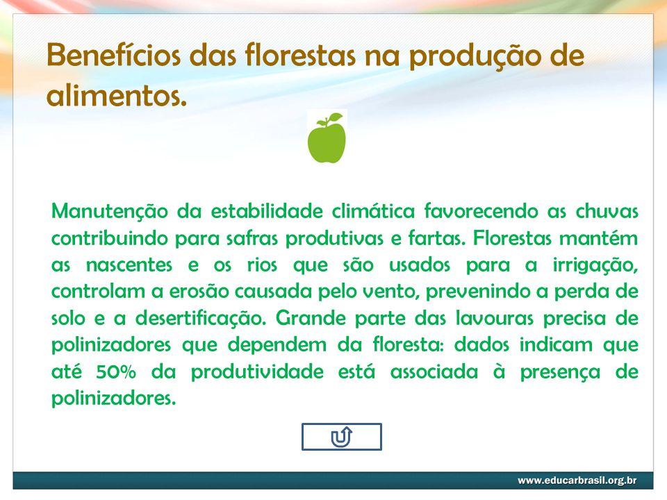 Benefícios das florestas na produção de alimentos. Manutenção da estabilidade climática favorecendo as chuvas contribuindo para safras produtivas e fa