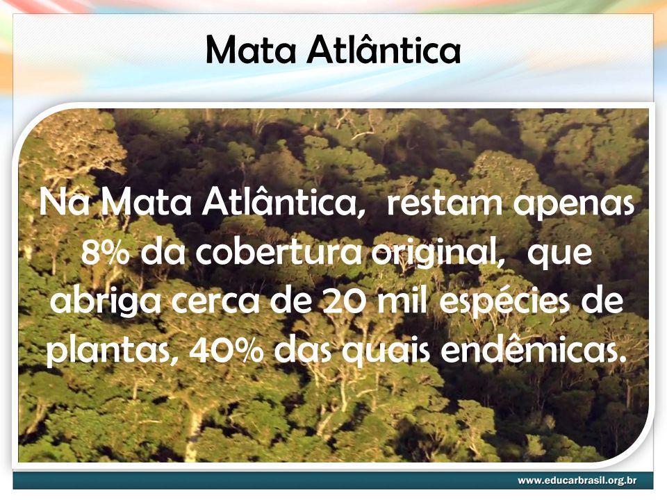 Mata Atlântica Na Mata Atlântica, restam apenas 8% da cobertura original, que abriga cerca de 20 mil espécies de plantas, 40% das quais endêmicas.