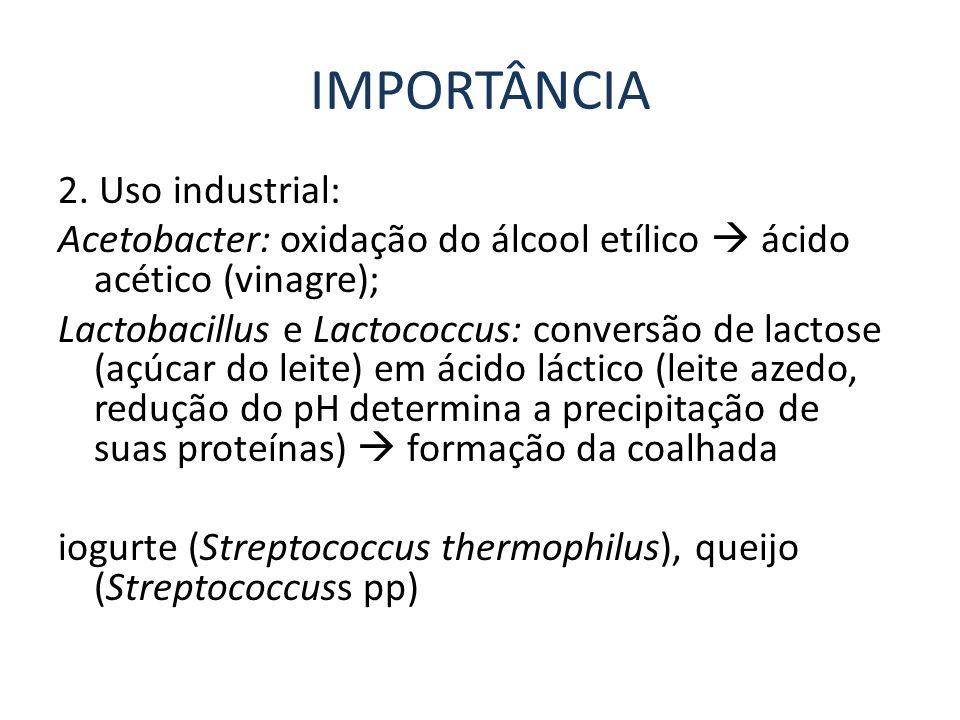 IMPORTÂNCIA 2. Uso industrial: Acetobacter: oxidação do álcool etílico ácido acético (vinagre); Lactobacillus e Lactococcus: conversão de lactose (açú
