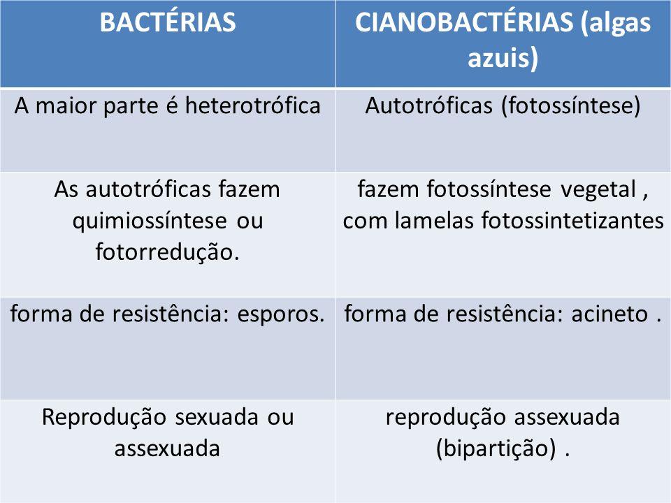 BACTÉRIASCIANOBACTÉRIAS (algas azuis) A maior parte é heterotróficaAutotróficas (fotossíntese) As autotróficas fazem quimiossíntese ou fotorredução. f