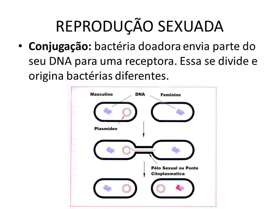 REPRODUÇÃO SEXUADA Conjugação: bactéria doadora envia parte do seu DNA para uma receptora. Essa se divide e origina bactérias diferentes.