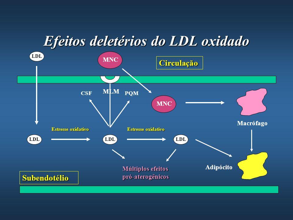 Efeitos deletérios do LDL oxidado LDL Subendotélio Circulação Estresse oxidativo Múltiplos efeitos pró-aterogênicos MNC MLM CSFPQM MNC Macrófago Adipó