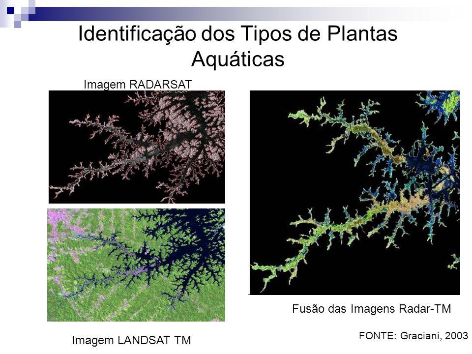 Identificação dos Tipos de Plantas Aquáticas Imagem RADARSAT Imagem LANDSAT TM Fusão das Imagens Radar-TM FONTE: Graciani, 2003