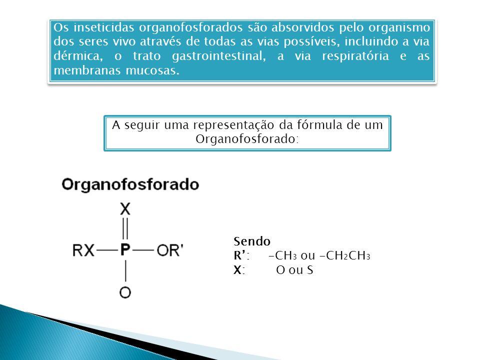 Os inseticidas organofosforados são absorvidos pelo organismo dos seres vivo através de todas as vias possíveis, incluindo a via dérmica, o trato gastrointestinal, a via respiratória e as membranas mucosas.