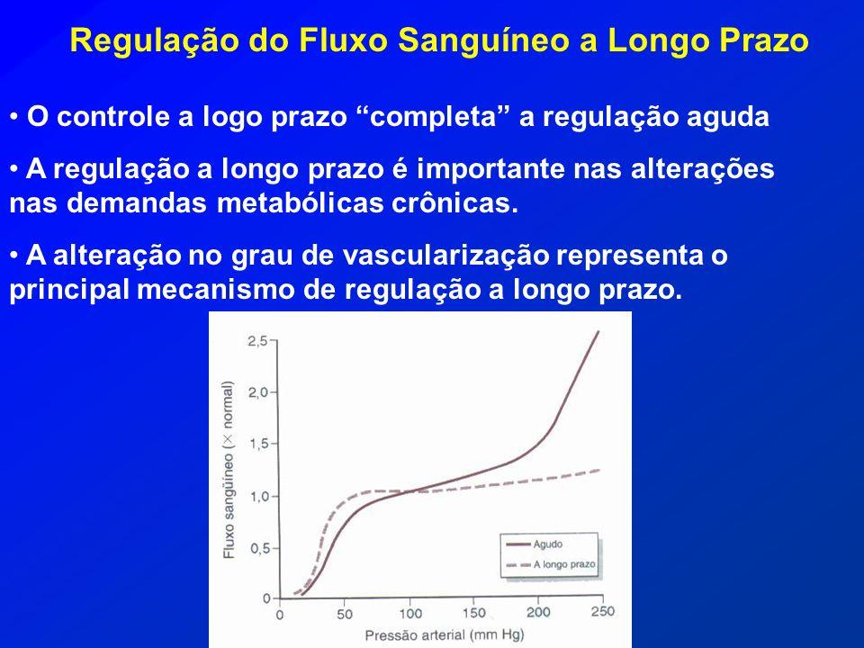 Regulação do Fluxo Sanguíneo a Longo Prazo O controle a logo prazo completa a regulação aguda A regulação a longo prazo é importante nas alterações na