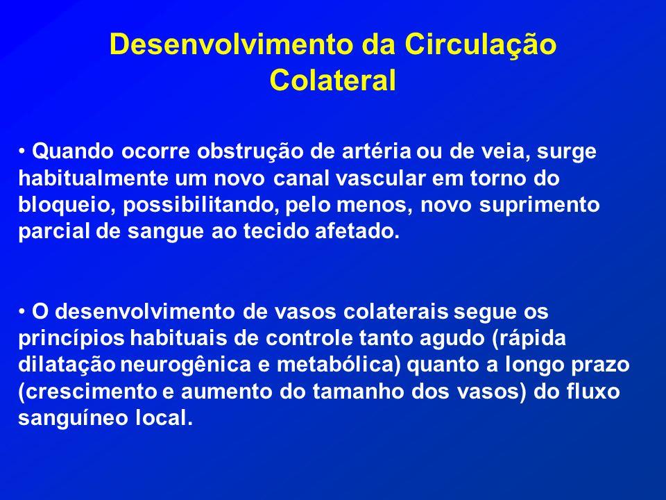 Desenvolvimento da Circulação Colateral Quando ocorre obstrução de artéria ou de veia, surge habitualmente um novo canal vascular em torno do bloqueio