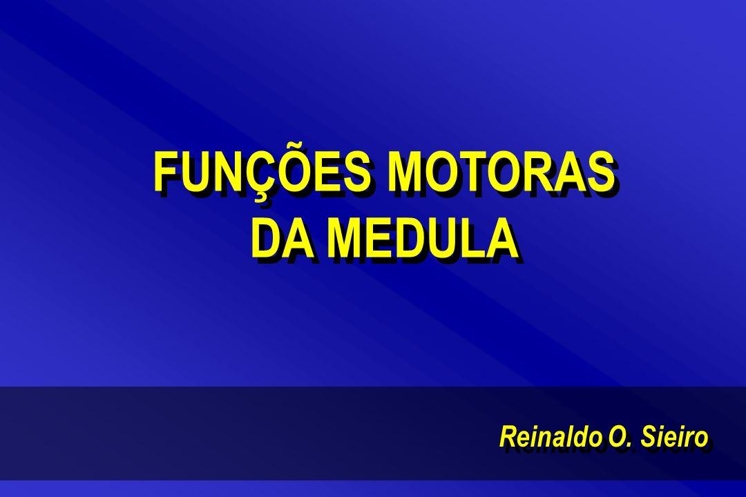 Reinaldo O. Sieiro FUNÇÕES MOTORAS DA MEDULA