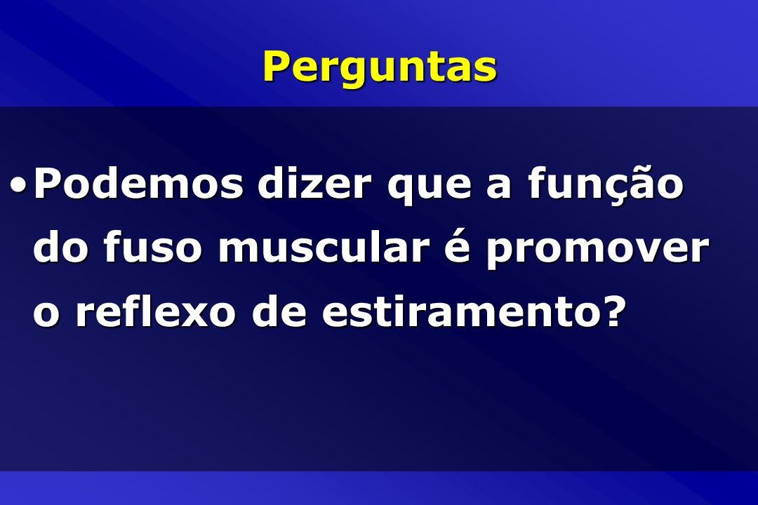 Perguntas Podemos dizer que a função do fuso muscular é promover o reflexo de estiramento?Podemos dizer que a função do fuso muscular é promover o ref