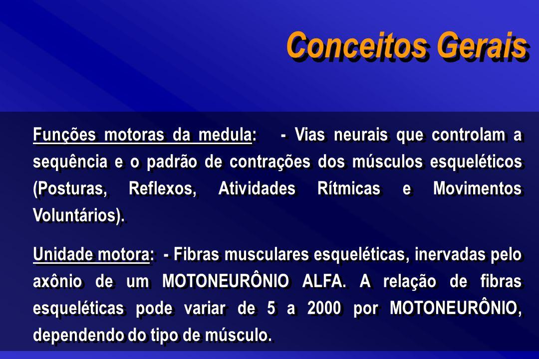 Conceitos Gerais Funções motoras da medula: - Vias neurais que controlam a sequência e o padrão de contrações dos músculos esqueléticos (Posturas, Ref