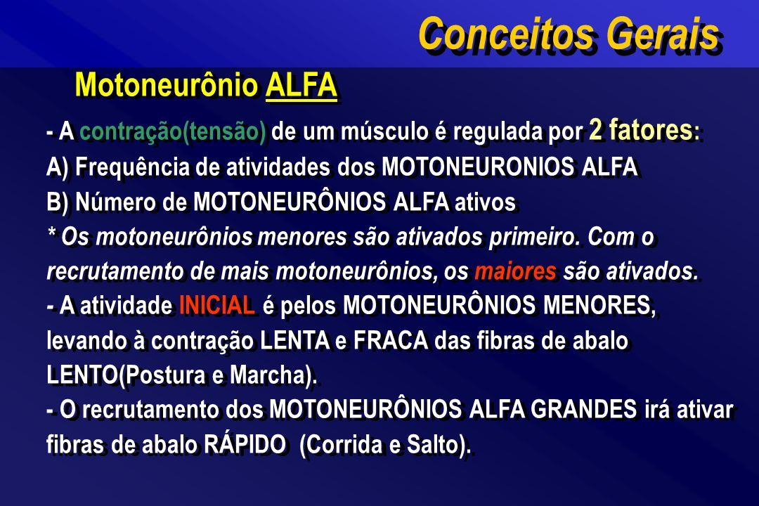 Motoneurônio ALFA - A contração(tensão) de um músculo é regulada por 2 fatores : A) Frequência de atividades dos MOTONEURONIOS ALFA B) Número de MOTON