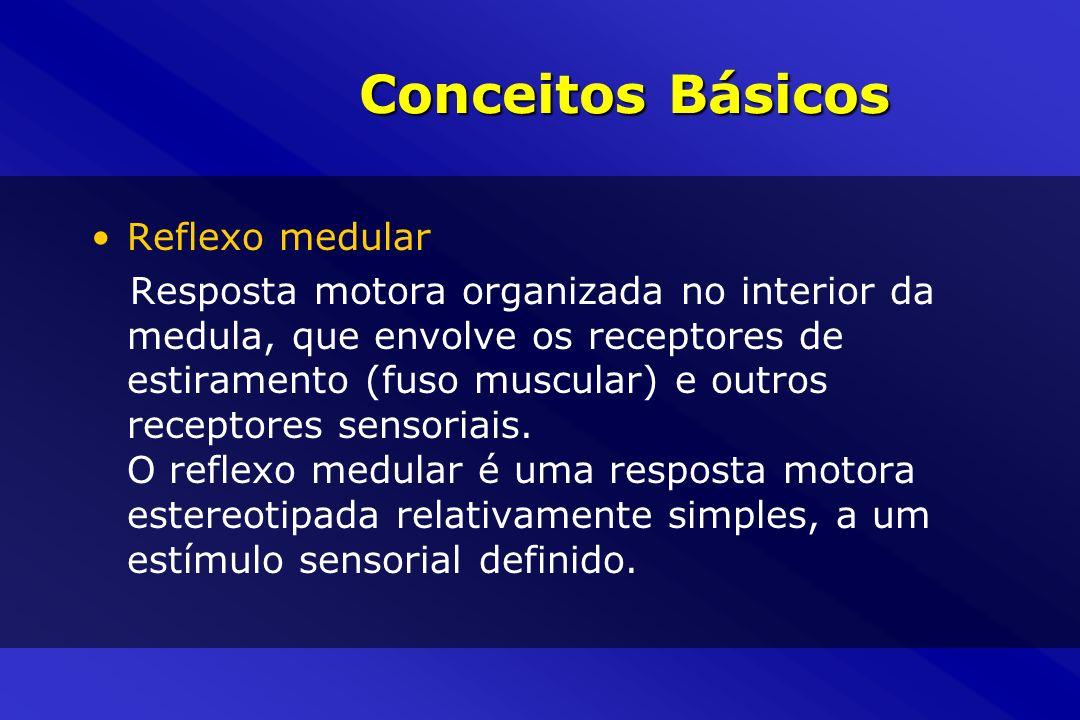 Conceitos Básicos Reflexo medular Resposta motora organizada no interior da medula, que envolve os receptores de estiramento (fuso muscular) e outros