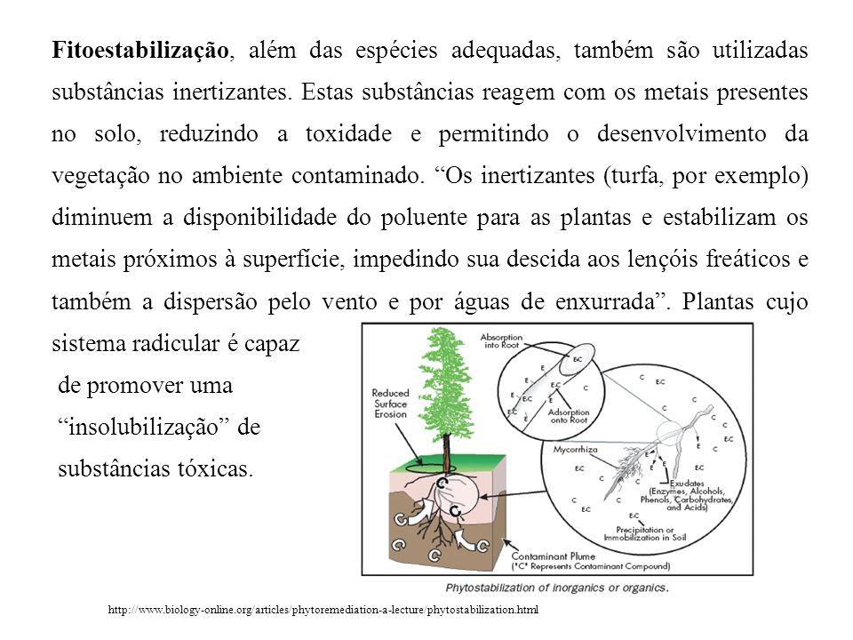 Fitoestabilização, além das espécies adequadas, também são utilizadas substâncias inertizantes. Estas substâncias reagem com os metais presentes no so