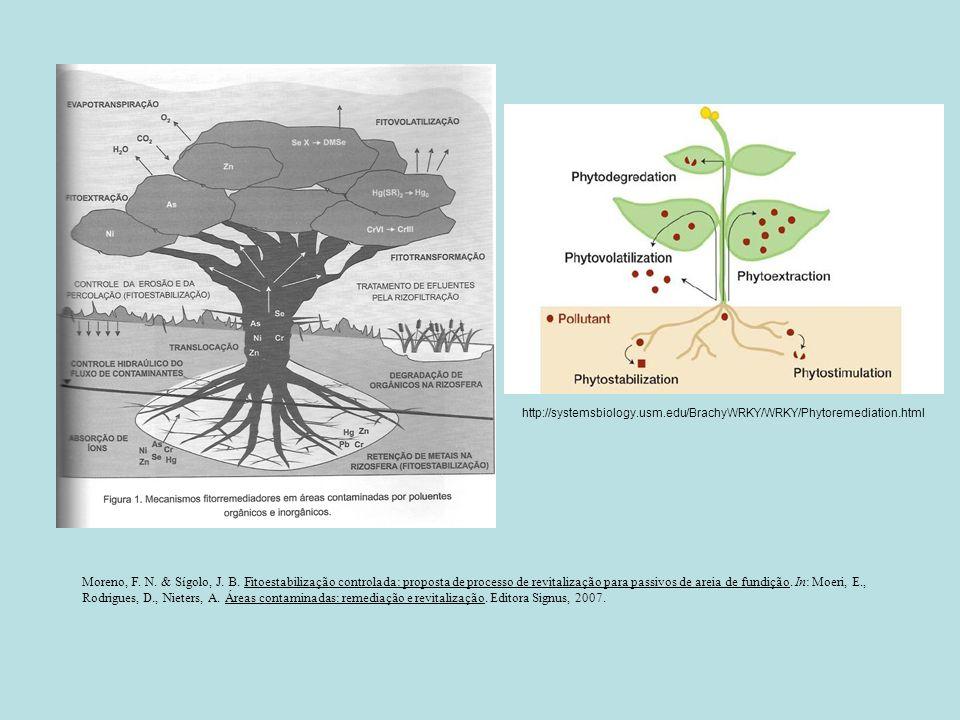 Moreno, F. N. & Sígolo, J. B. Fitoestabilização controlada: proposta de processo de revitalização para passivos de areia de fundição. In: Moeri, E., R