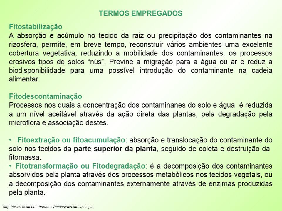 http://www.unioeste.br/cursos/cascavel/biotecnologia