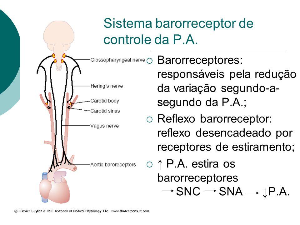 Sistema barorreceptor de controle da P.A. Barorreceptores: responsáveis pela redução da variação segundo-a- segundo da P.A.; Reflexo barorreceptor: re