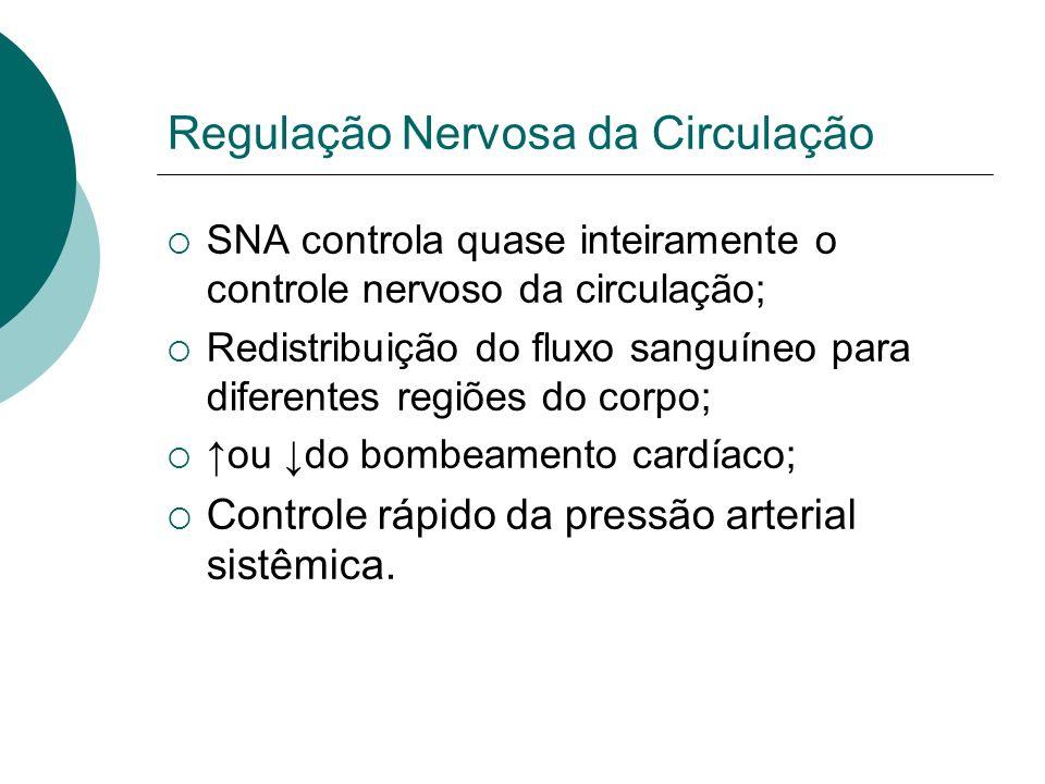 Regulação Nervosa da Circulação SNA controla quase inteiramente o controle nervoso da circulação; Redistribuição do fluxo sanguíneo para diferentes re