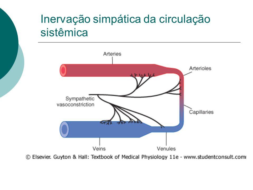 Inervação simpática da circulação sistêmica