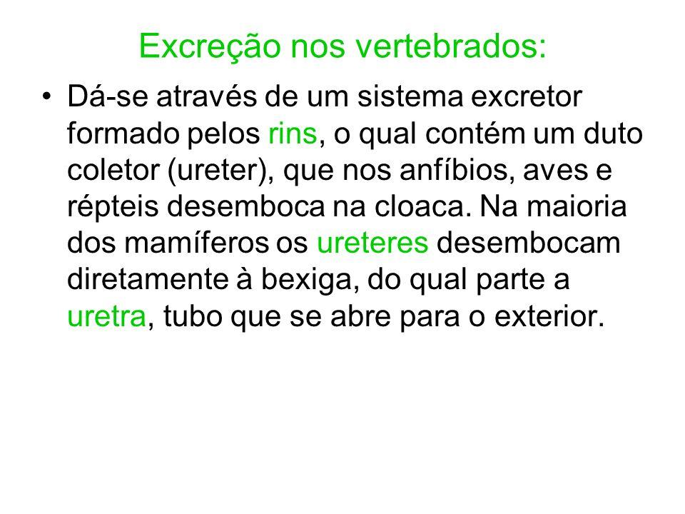 Excreção nos vertebrados: Dá-se através de um sistema excretor formado pelos rins, o qual contém um duto coletor (ureter), que nos anfíbios, aves e ré