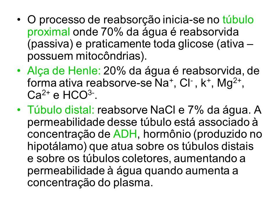 O processo de reabsorção inicia-se no túbulo proximal onde 70% da água é reabsorvida (passiva) e praticamente toda glicose (ativa – possuem mitocôndri