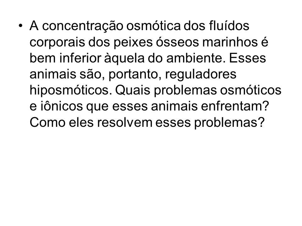 A concentração osmótica dos fluídos corporais dos peixes ósseos marinhos é bem inferior àquela do ambiente. Esses animais são, portanto, reguladores h