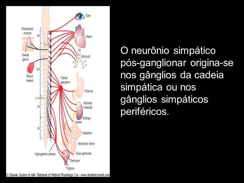 O neurônio simpático pós-ganglionar origina-se nos gânglios da cadeia simpática ou nos gânglios simpáticos periféricos.