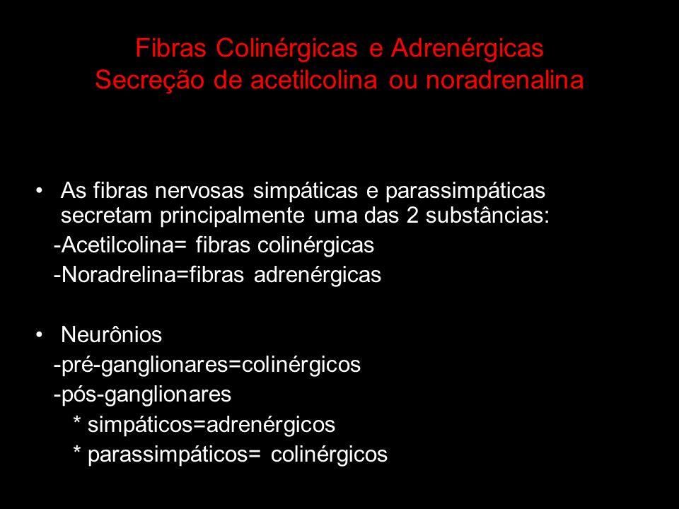 Fibras Colinérgicas e Adrenérgicas Secreção de acetilcolina ou noradrenalina As fibras nervosas simpáticas e parassimpáticas secretam principalmente u