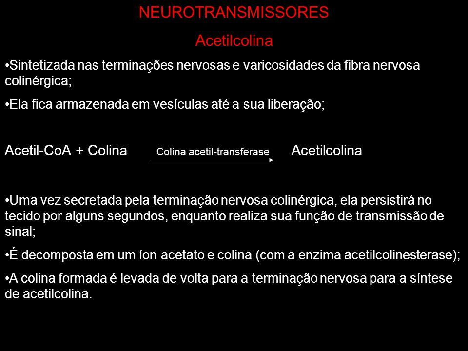 NEUROTRANSMISSORES Acetilcolina Sintetizada nas terminações nervosas e varicosidades da fibra nervosa colinérgica; Ela fica armazenada em vesículas at